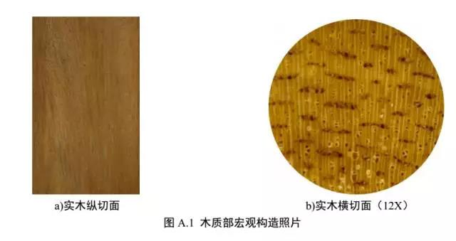 沉香木质部宏观构造图