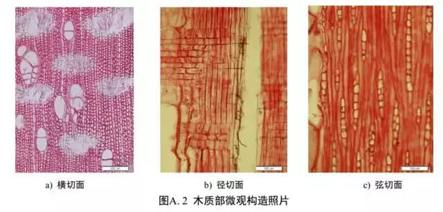 沉香木质部微观构造图